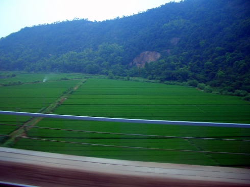 Rice fields in Zhejiang Province, flying past at 200 km/h
